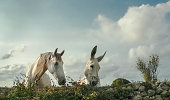 A horse and a donkey paying great attention