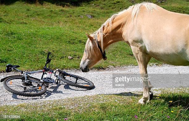 Pferd und Fahrrad