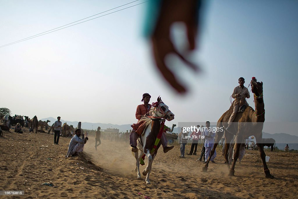 A horse and camel race during a camel fair on November 19, 2012 in Pushkar, India. The annual camel and livestock fair is held over five days, and attracts thousands of tourists.