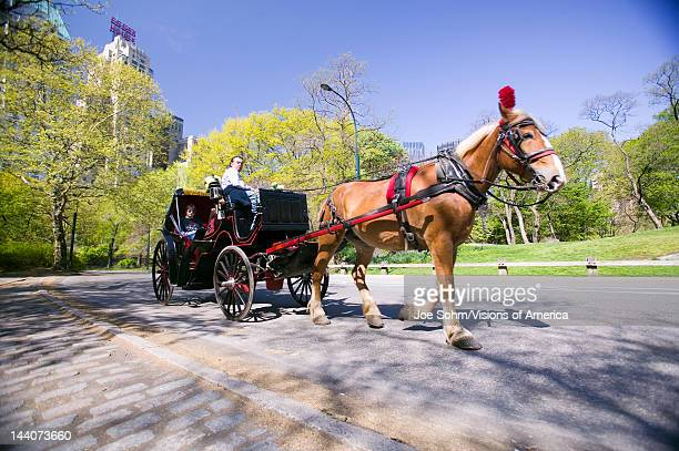 Horse and carriage drives through Central Park Manhattan New York City New York