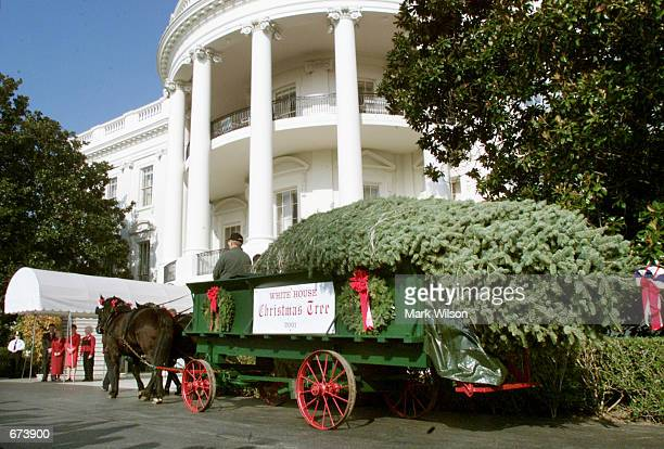 A horse and cart deliver this year's Christmas tree a Pennsylvania Concolor Fir to the White House November 28 2001 in Washington DC