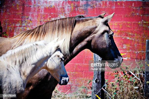 Horse and Colt Standing Near Red Brick Wall