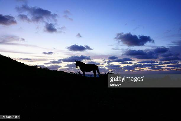 A horse and dawn sky