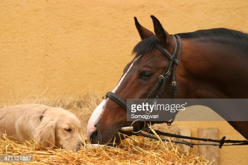 Horse and dog first meet