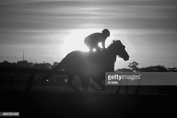 A horse and exercise rider train at sunrise on the main track at Belmont Park on June 2 2014 in Elmont New York