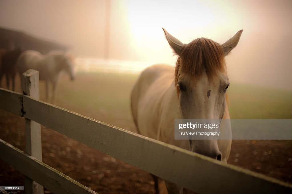 Horse and fog : Stock Photo