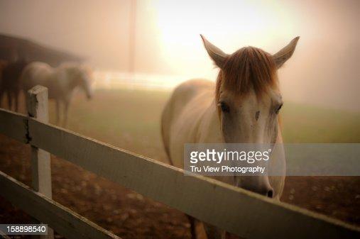 Horse and fog : Bildbanksbilder