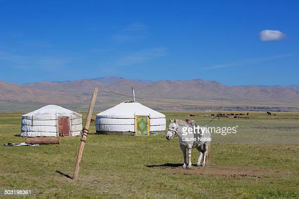 Horse and Gers, Orkhon Valley