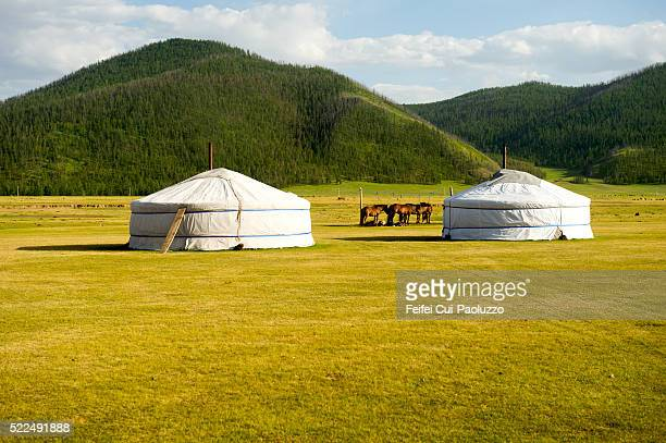 Horse and Mongolia yurt at Orkhon Valley in Central of Mongolia