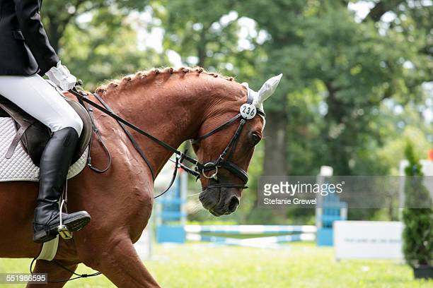 Horse and rider in show jumping event