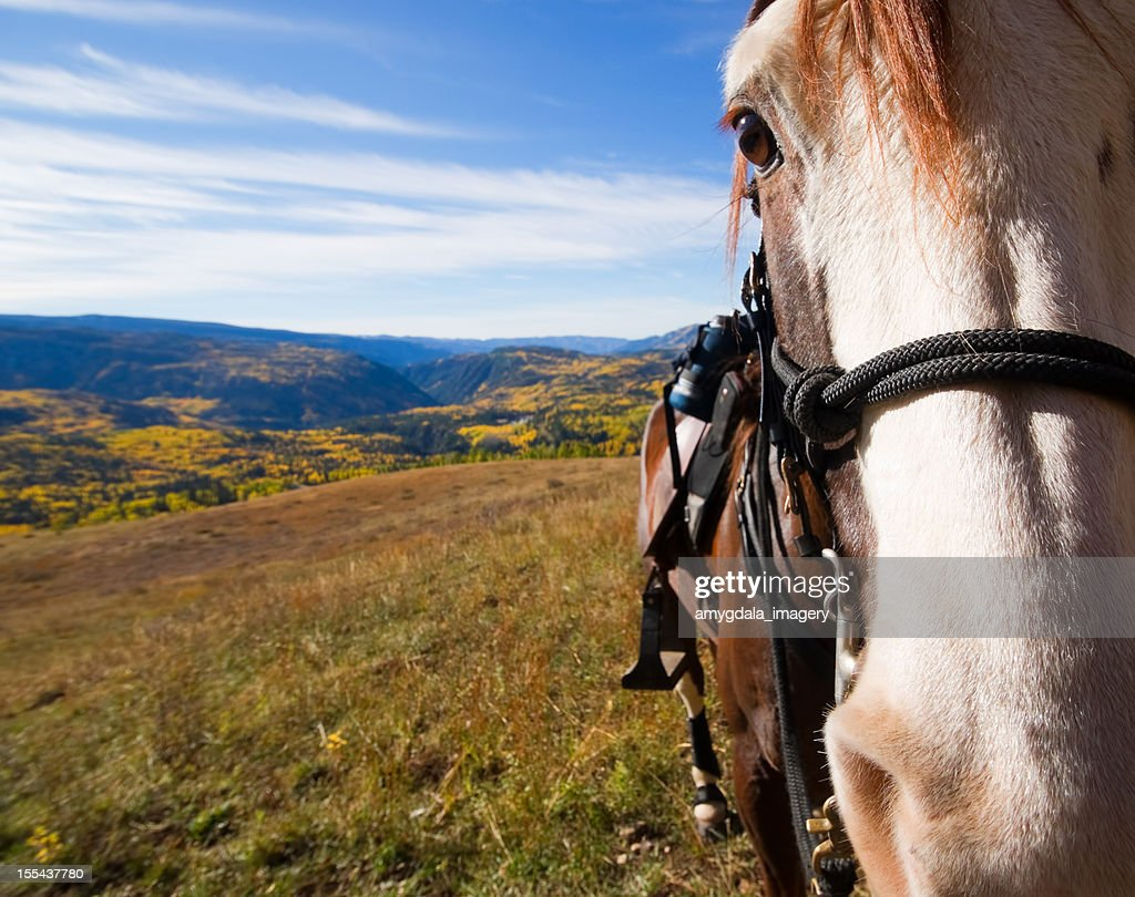 horse and rocky mountain autumn landscape : Stock Photo