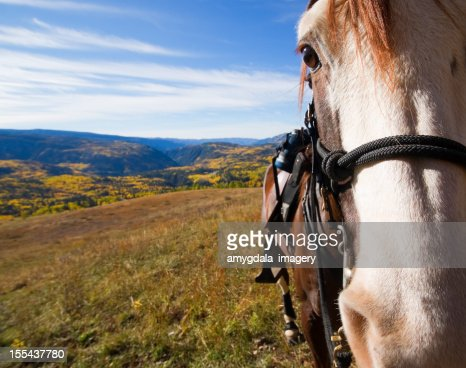 horse and rocky mountain autumn landscape : Stock Photo
