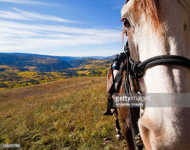 horse and rocky mountain autumn landscape