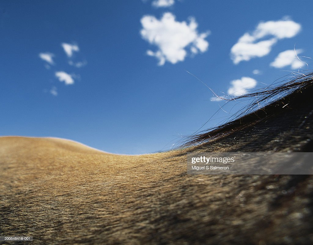 Horse and sky, close-up