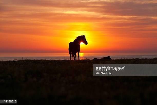 Horse at Jeju island during sunrise