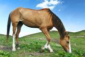 Horse at Mukshpuri Meadows