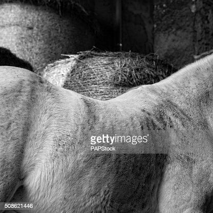Horse back close up whit hay cylinder background : Stock Photo