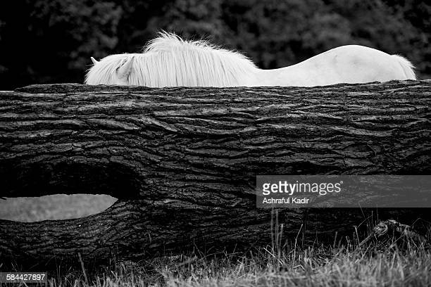 A horse behind a fallen tree
