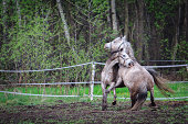 Horse biting each other