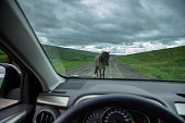 Horse Blocking Rural Road