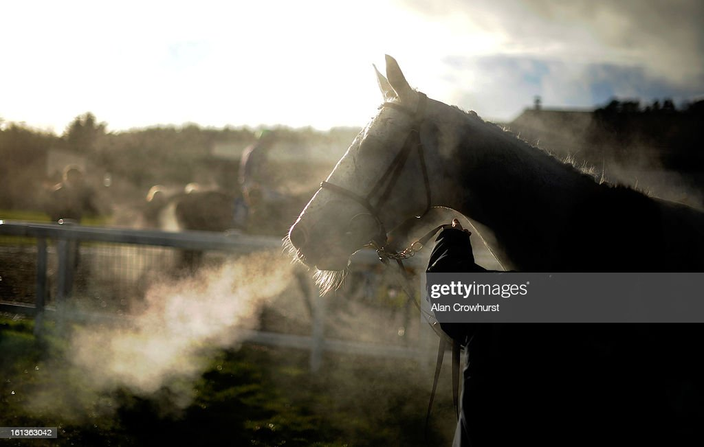 A horse breathes heavily after finishing at Exeter racecourse on February 10, 2013 in Exeter, England.