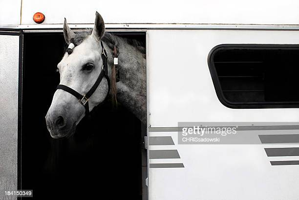 Horse Care and Transport