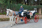Horse carriage ride for a mother and daughter