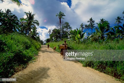 Horse Carrying Load on Dirt Road