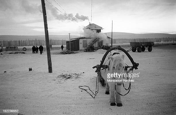 A horse carrying the yoke to draw a cart Siberia January 1964