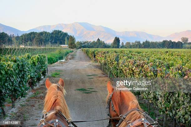 Horse Cart Casa Silva Vineyard Chile