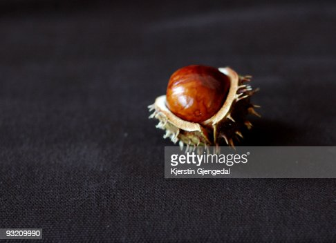 Horse chestnut in its shell