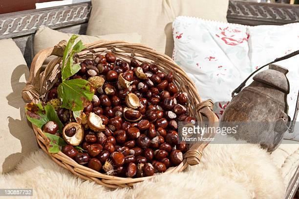 Horse Chestnuts or Conkers (Aesculus hippocastanum) with chestnut leaves, seeds and capsules in a wicker basket
