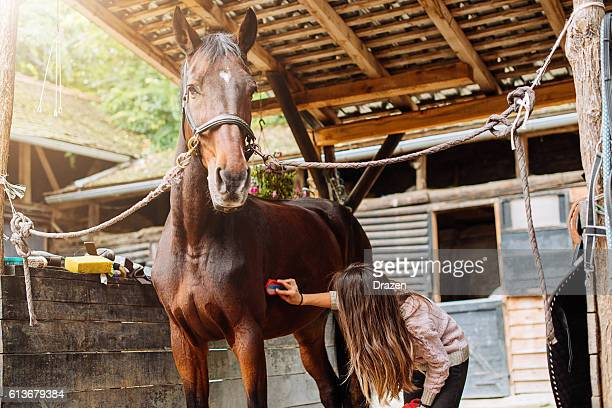 Horse cleaning and brushing