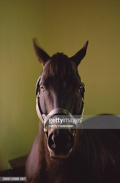 Horse, close-up, headshot