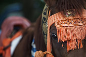 A horse decorated with a traditional bridle walks along a street during the Soma Nomaoi festival in Soma Fukushima Prefecture Japan on Saturday July...