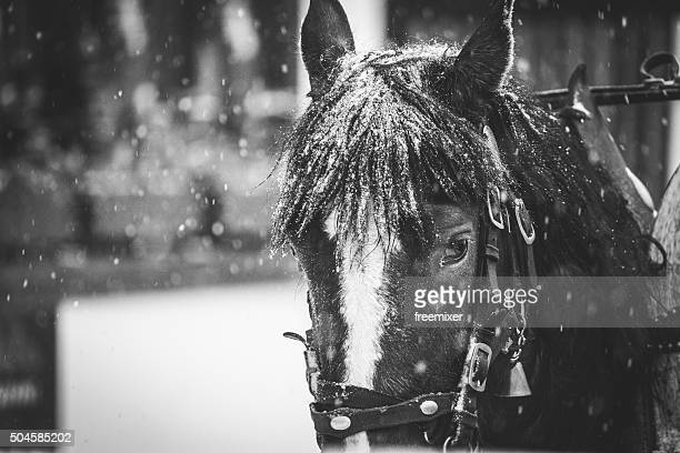 Horse drawn carriage in the street during a snowstorm