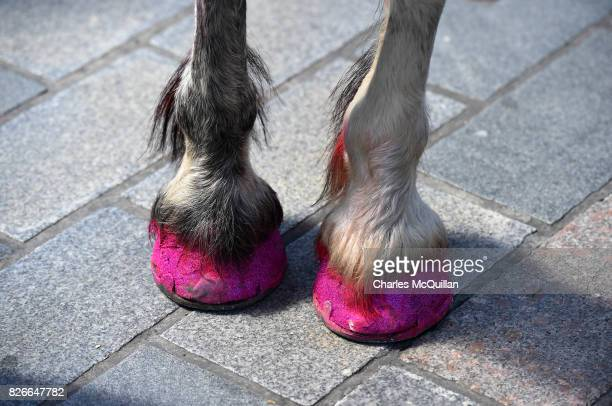 A horse dressed as a unicorn with glitter hooves takes part in the Belfast Gay Pride parade on August 5 2017 in Belfast Northern Ireland The province...