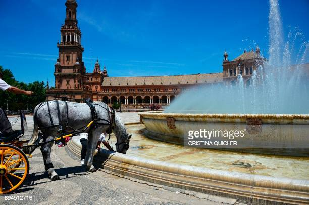 A horse drinks water from a fountain on Plaza de Espana in Sevilla on June 10 2017 QUICLER