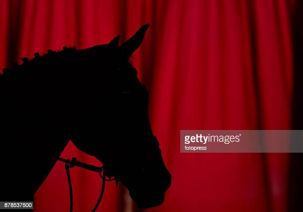 A horse during the Madrid Horse Week 2017 at IFEMA on November 23 2017 in Madrid Spain