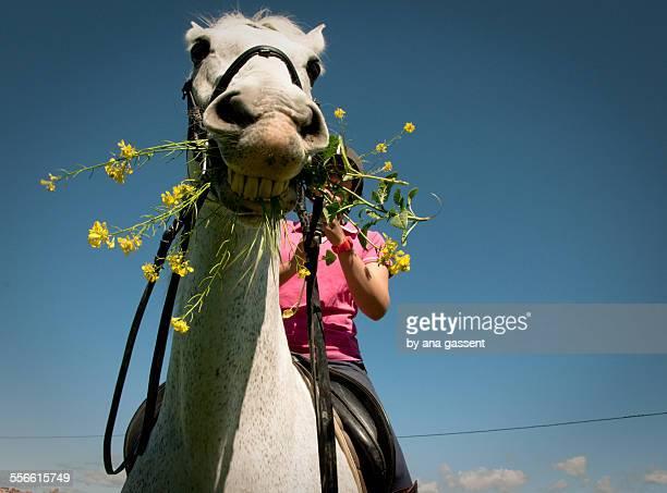 horse eating flowers