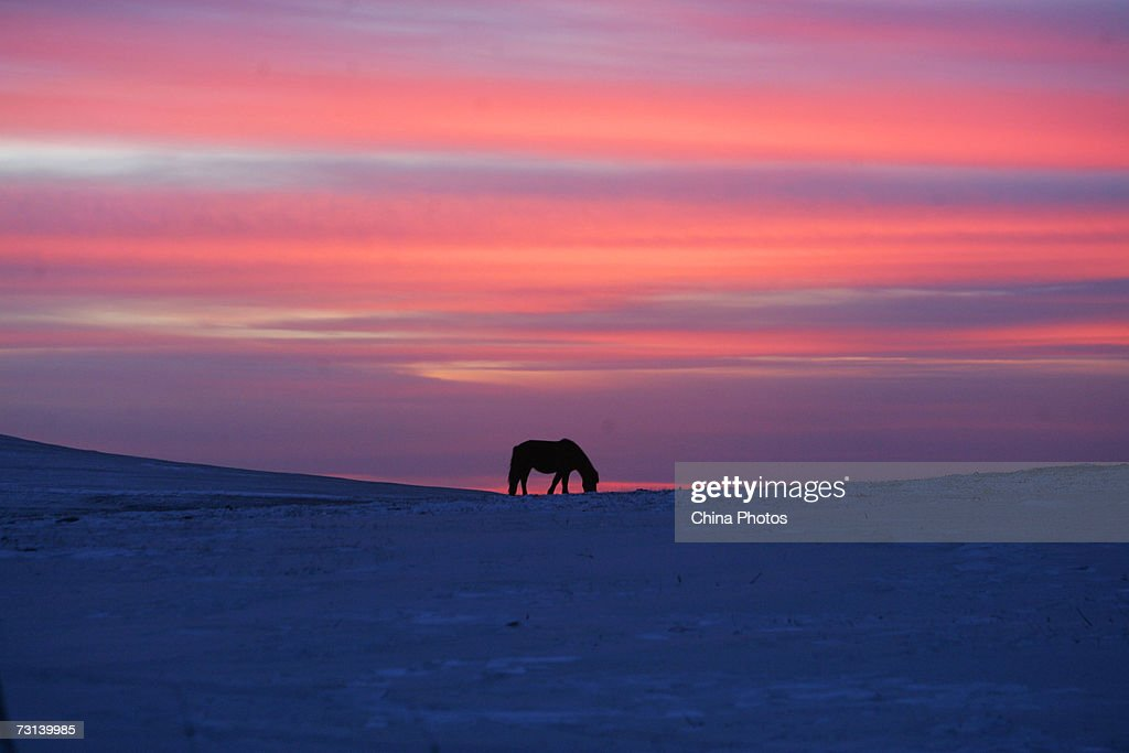 A horse eats grass at the grassland on sunset on January 28 2007 in Wulanchabu League of Inner Mongolia Autonomous Region China