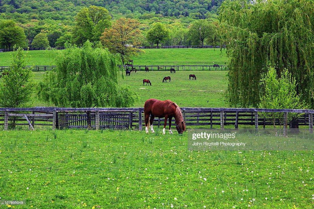 Horse farm : Stock Photo
