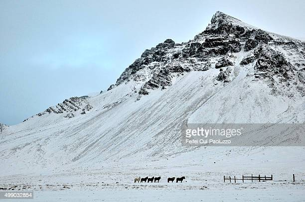 Horse farm under snow near Borgarnes Iceland