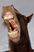 Horse found up.