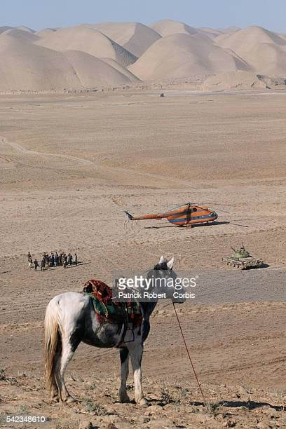 Horse from the Maymana cavalry in Herat Province allied to General Dostum against the Taliban The city of Herat was was captured by the Taliban in...