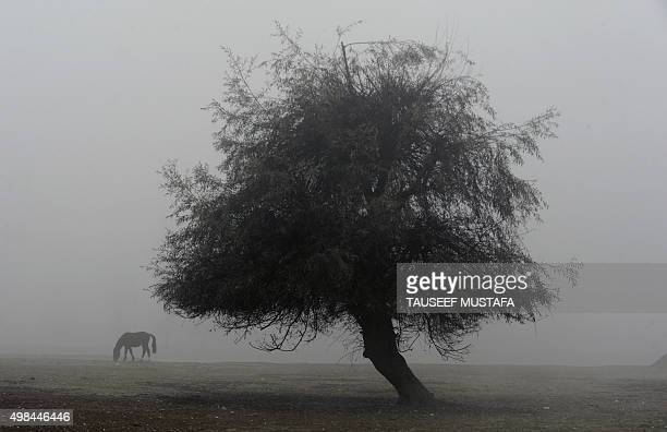 A horse grazes near Vullar Lake during dense fog in Bandipora north of Srinagar on November 23 2015 The Kashmir region is experiencing seasonal cold...