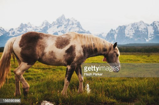 Horse Grazing in the Foothills : ストックフォト