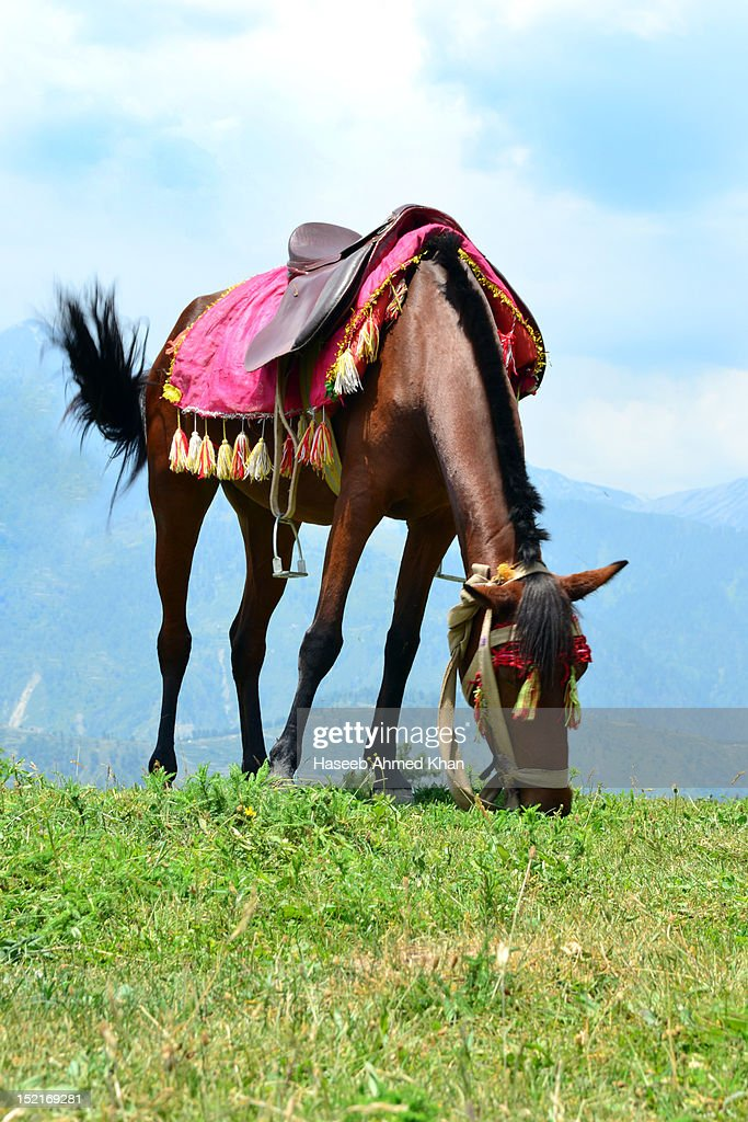 Horse grazing on mountains