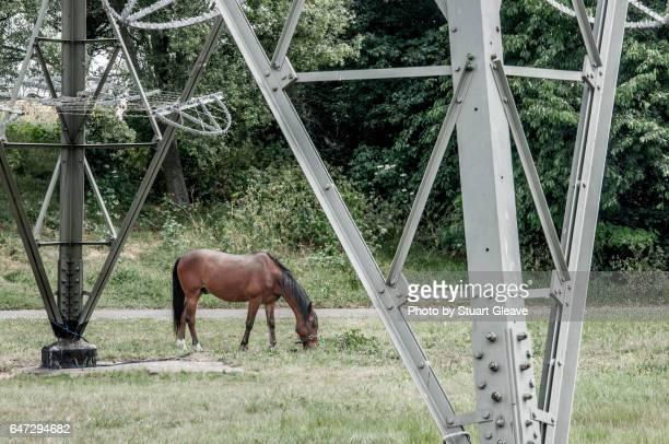 Horse grazing under electricity pylon