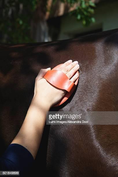 Horse Grooming, Baden-Wuerttemberg, Germany, Europe